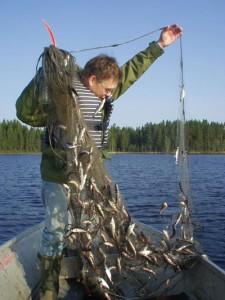 Tynningsfiske